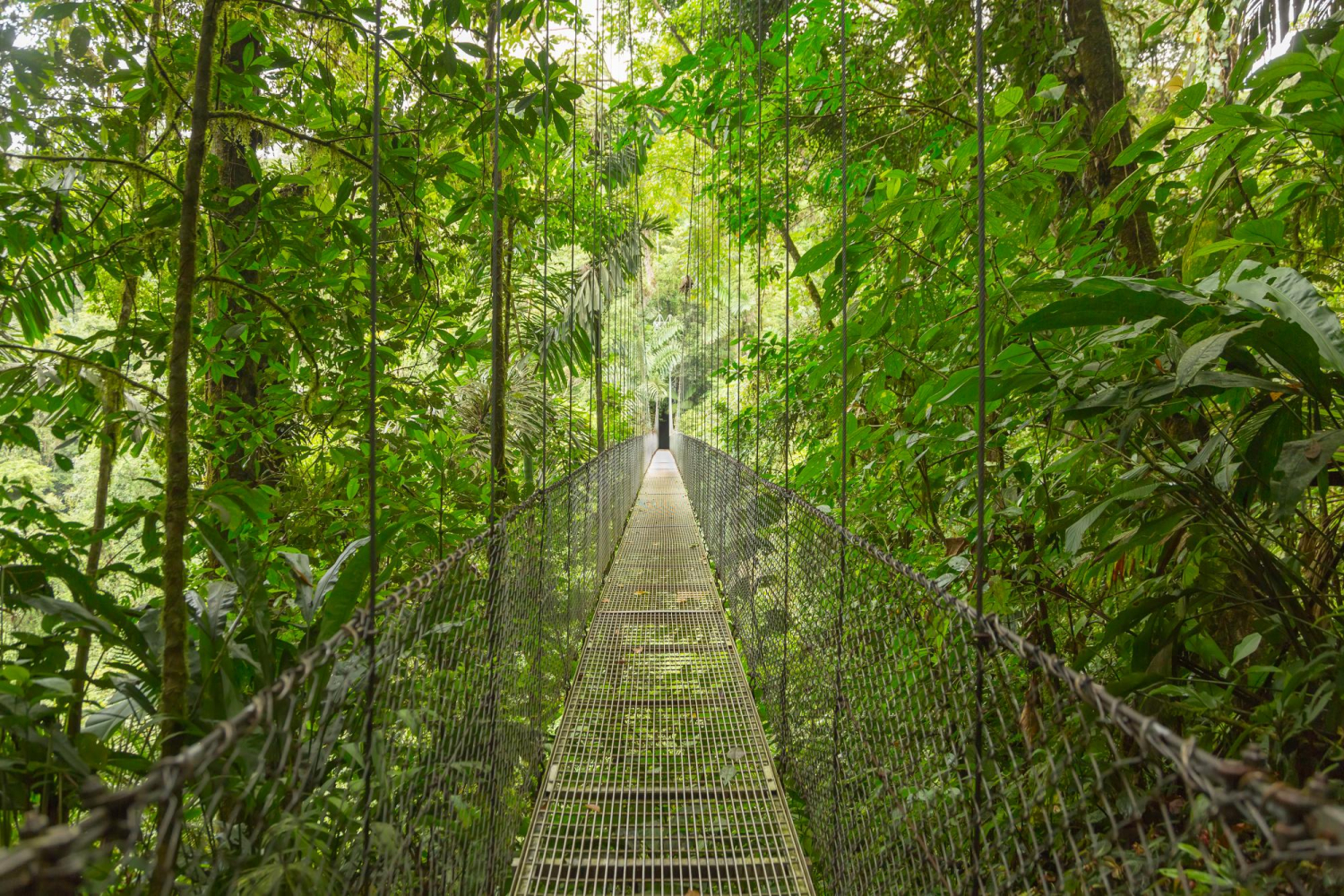 Hanging,Bridge,At,Natural,Rainforest,Park,In,Costa,Rica